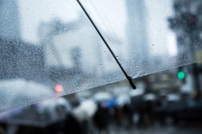 雨の中の傘の写真